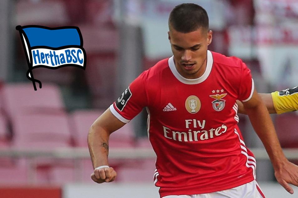 Weigl will Benfica verlassen! Schlägt Hertha zu?