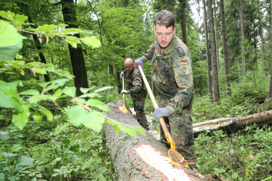 Erzgebirge: So hilft die Bundeswehr im Kampf gegen Borkenkäfer