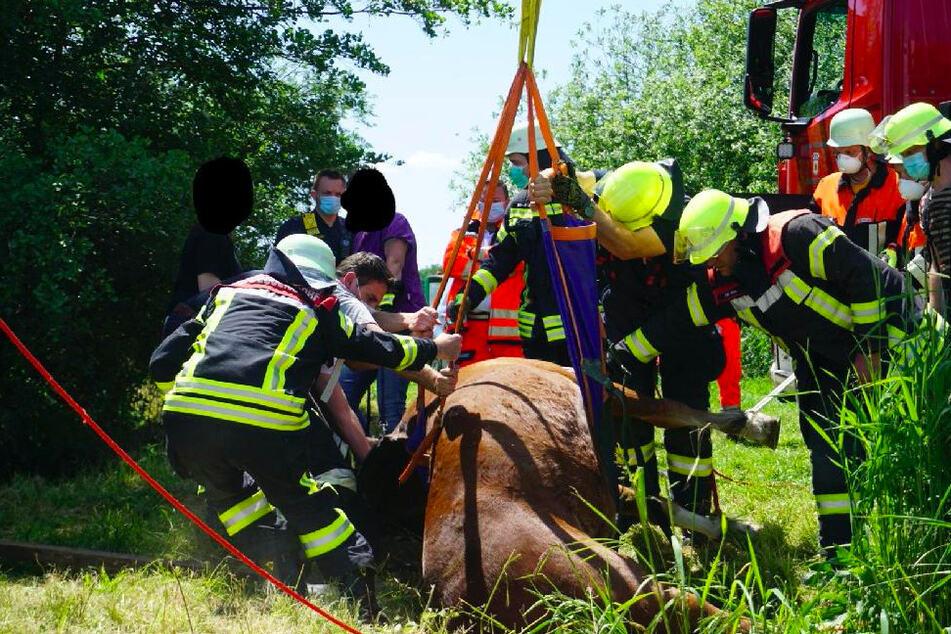Pferd völlig hilflos: Feuerwehr gibt alles, um Tier zu retten