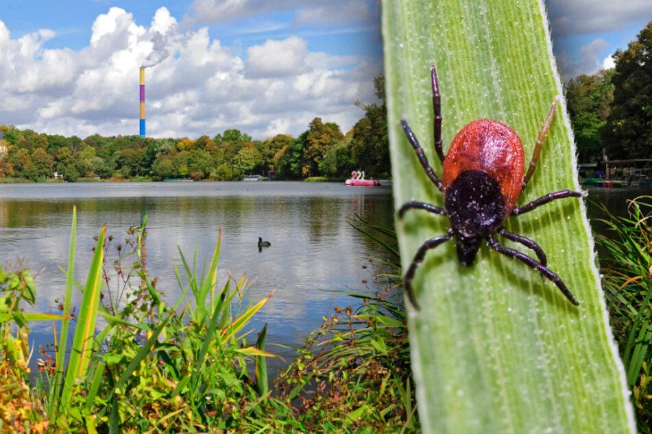 Lästige Biester! So gefährlich sind Zecken im Erzgebirge, Chemnitz und Umgebung
