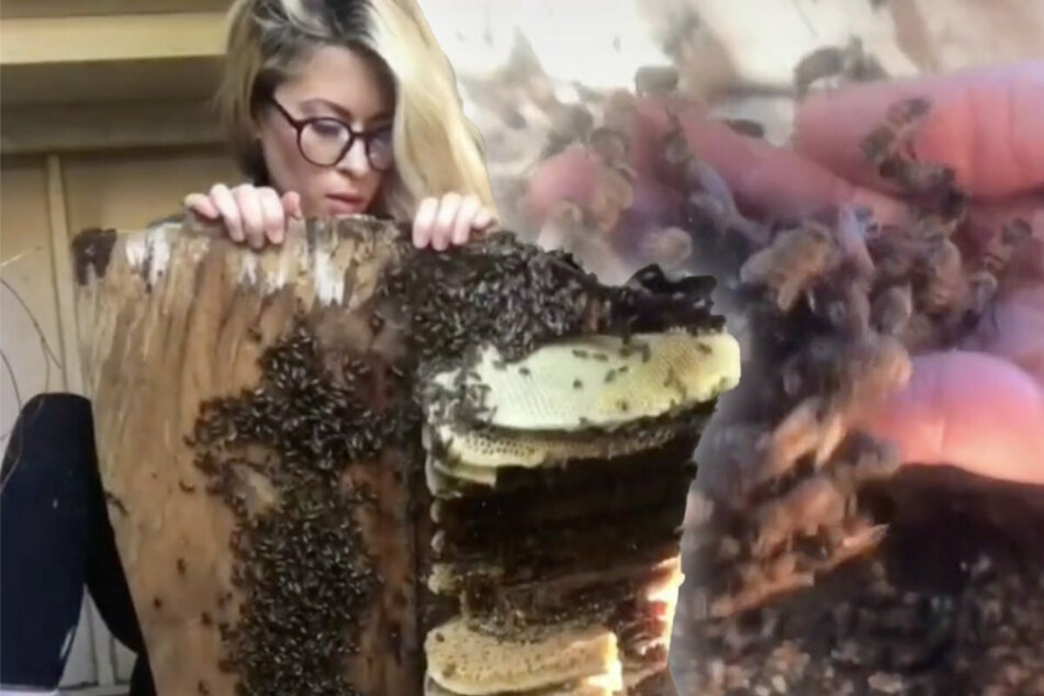 Woman uncovers huge bee hive – what happens next is un-bee-lievable!