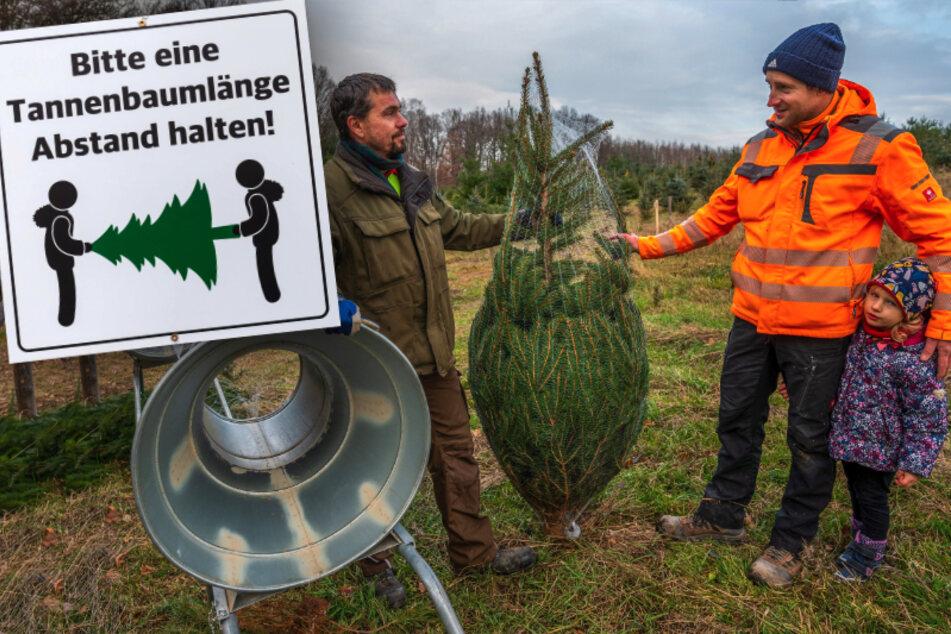 Trotz Corona: Hier floriert das Weihnachtsbaum-Geschäft
