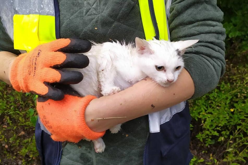 Regelmäßig werden die Helfer zur Katzenrettung gerufen.