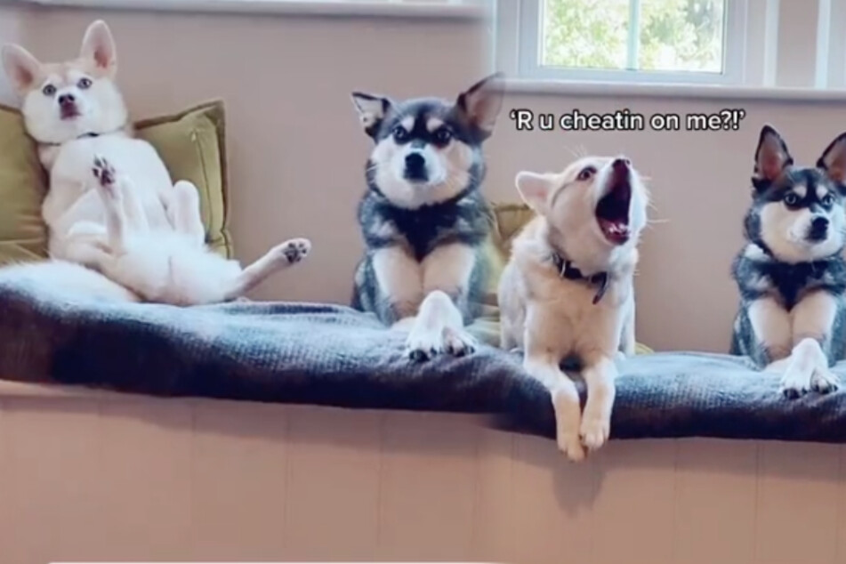 Attention hogs: puppies' hilarious reaction to owner ignoring them goes viral