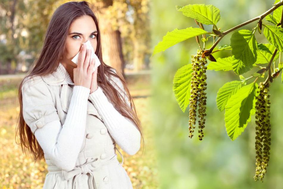 Frühlingswetter in Deutschland: Achtung Allergiker, diese Pollen fliegen schon jetzt!
