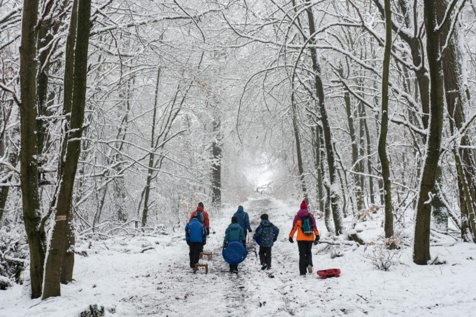 Drei Erwachsene und drei Kinder ziehen ihre Schlitten durch den winterlichen Wald bergauf.