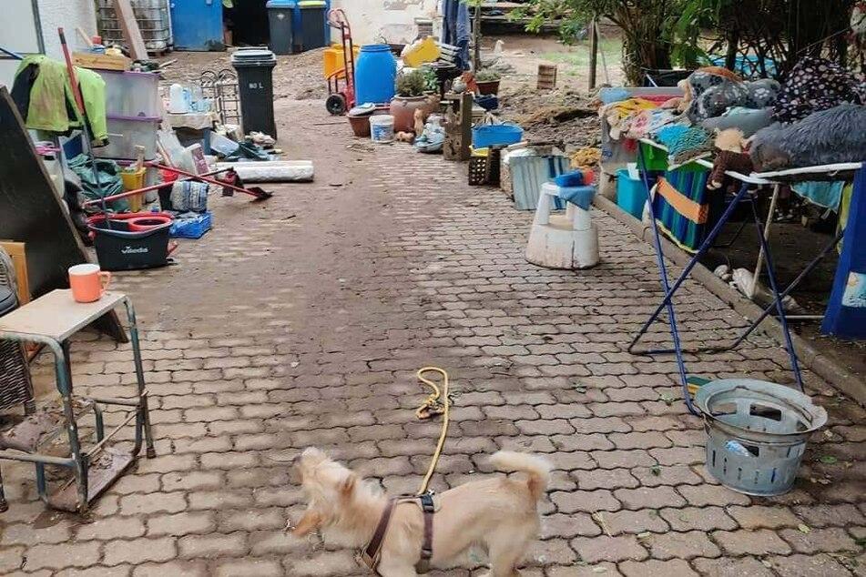 Die Pflegestelle Euskirchen hat das Hochwasser hart getroffen: Hier starben 41 Igel.