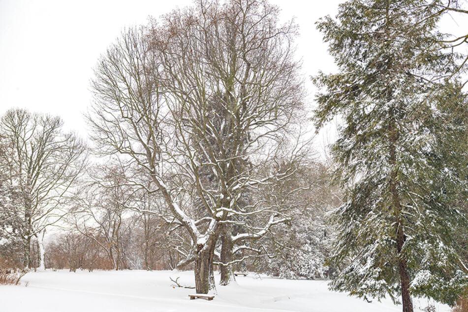 Die Winterlandschaft im Helfenberger Park wird erst einmal nicht durch das Rattern von Kettensägen gestört.