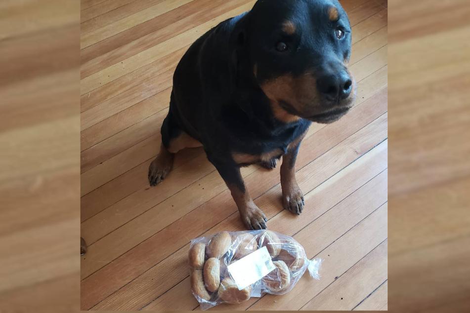 Hündin Jakey bewacht das Brot ihrer Besitzer.