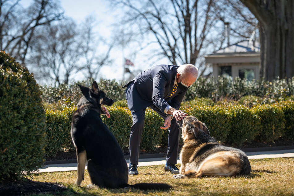 President Joe Biden is happy to have his dogs back with him at the White House.