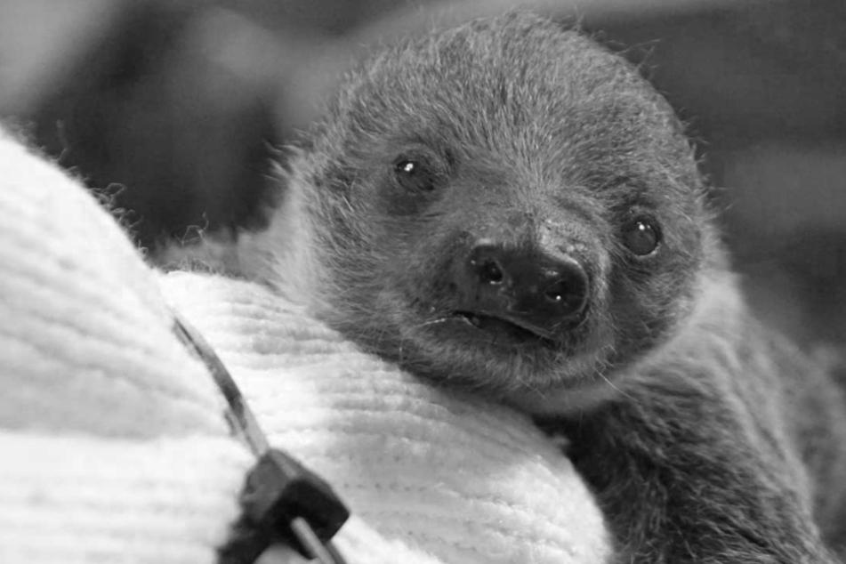 Dresdner Zoo trauert um zwei verstorbene Bewohner