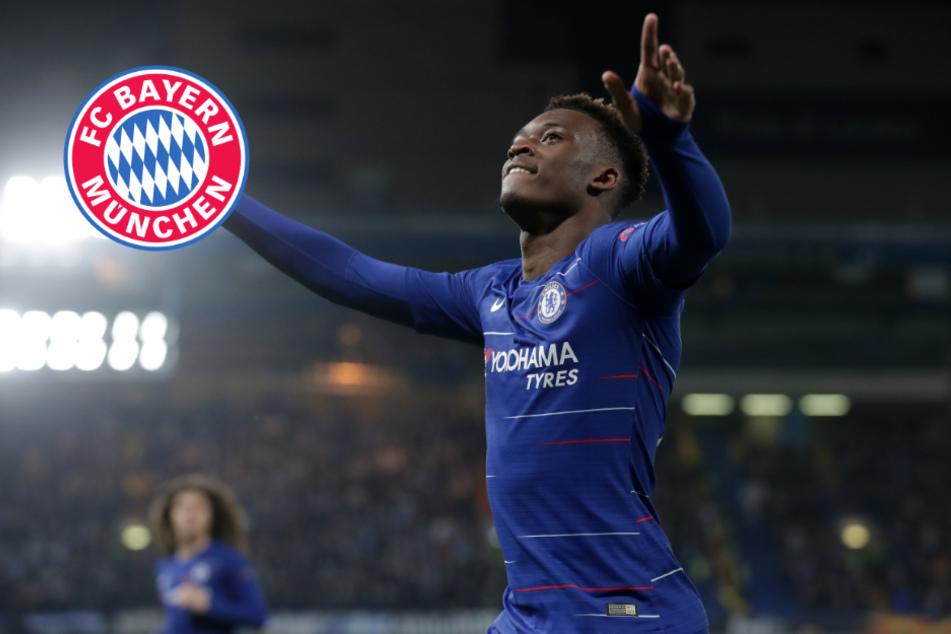 FC Bayern und Hudson-Odoi: Ließ diese Forderung von Chelsea den Deal erneut platzen?