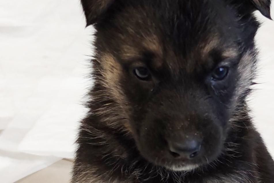 Hausbewohner hören tagelang Hundejaulen: Dann macht die Polizei eine grauenhafte Entdeckung
