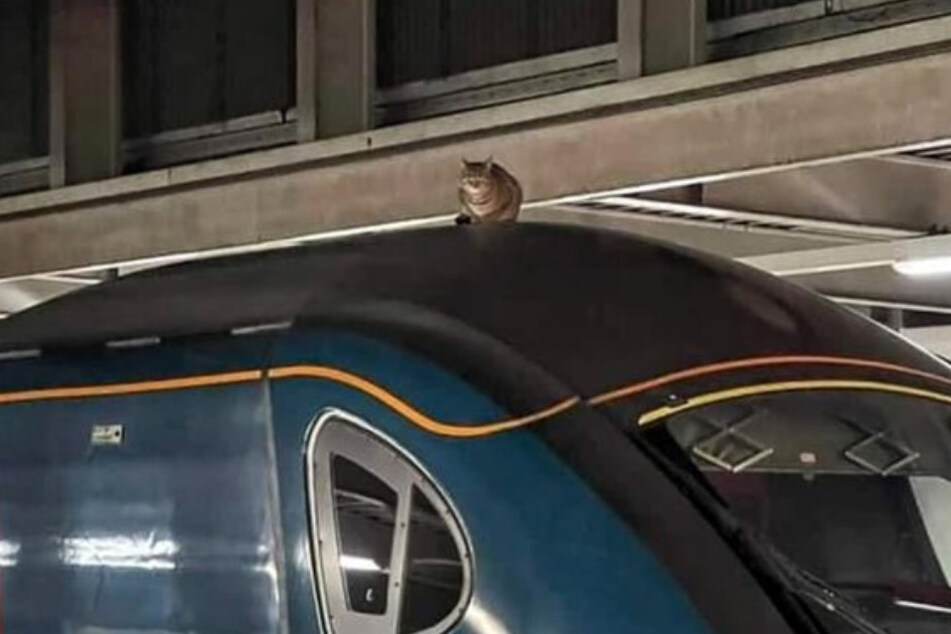 Luckily someone saw this tabby cat before the train departed the station.