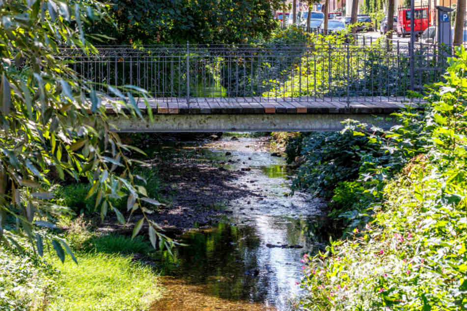 Die Prießnitz führt kaum noch Wasser. Wasser schöpfen, selbst mit kleinen Gefäßen, ist verboten.