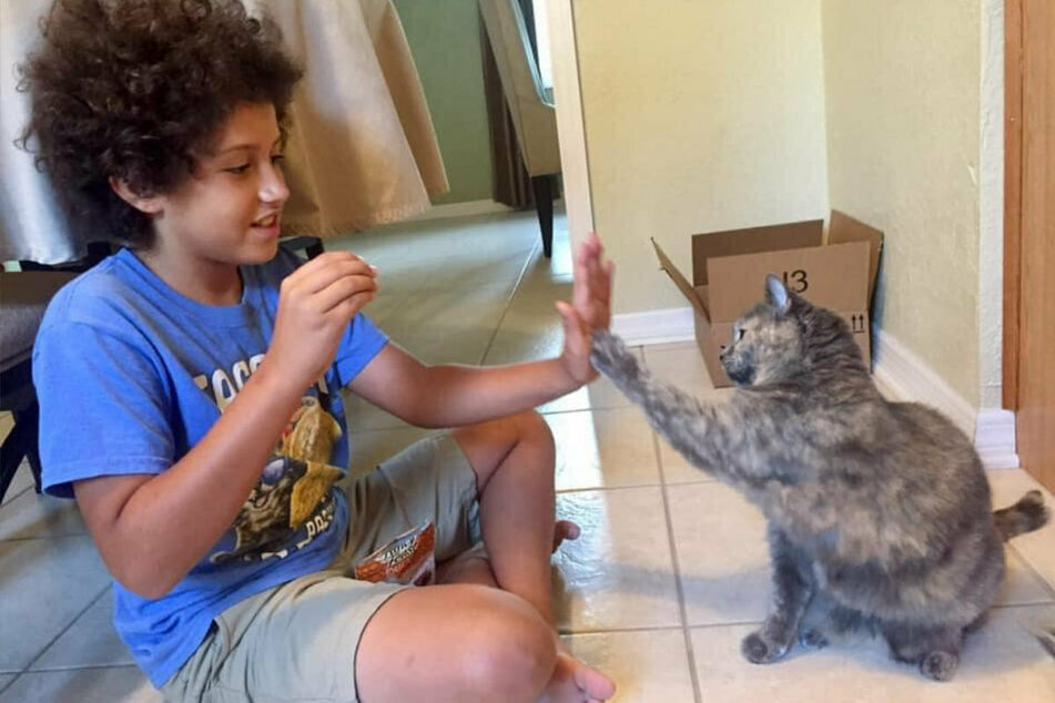 Kaeden rewarded the cats with treats for their cooperation.