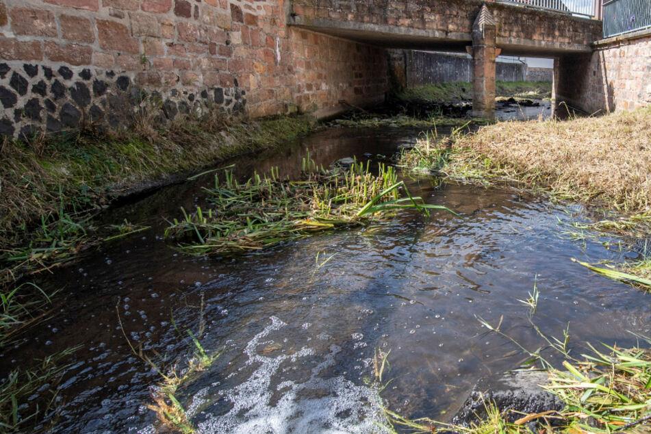 """Das Foto zeigt den Bach """"Bleiche"""" in der Ortsmitte von Ortenberg-Bergheim, in dem das Krokodil angeblich gesichtet wurde."""