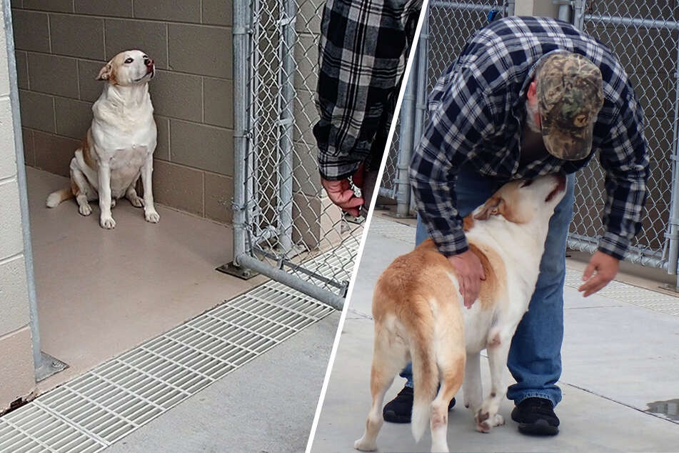 Depressed pup smiles for the first time in years after heartwarming reunion
