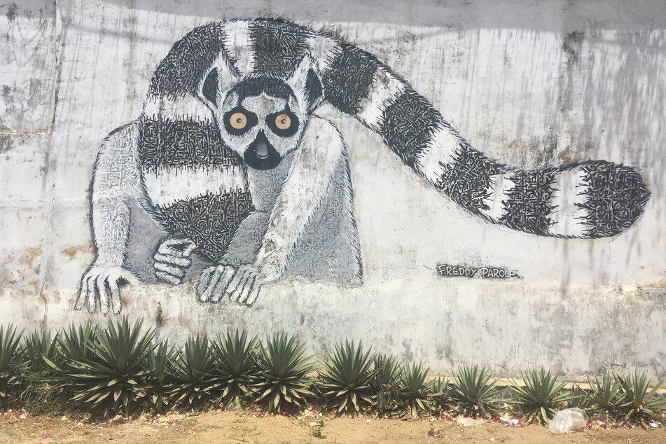 Lemuren sind auf Madagaskar allgegenwärtig.