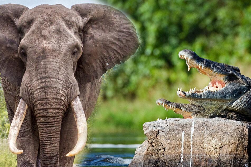 Grausame Wilderer nutzen Coronakrise gnadenlos aus!