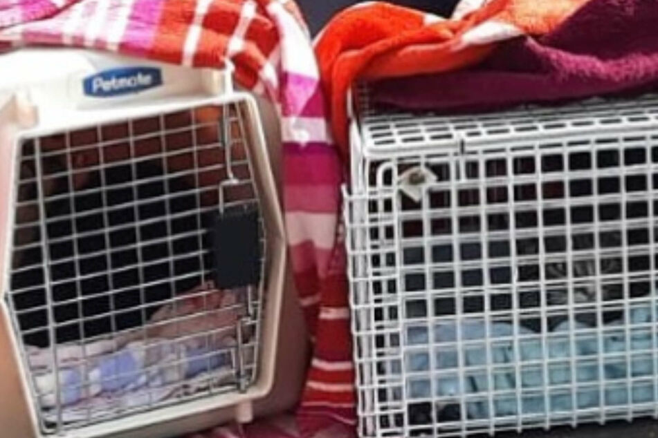 Katzen kommen lebenslänglich in den Knast: Das steckt dahinter!