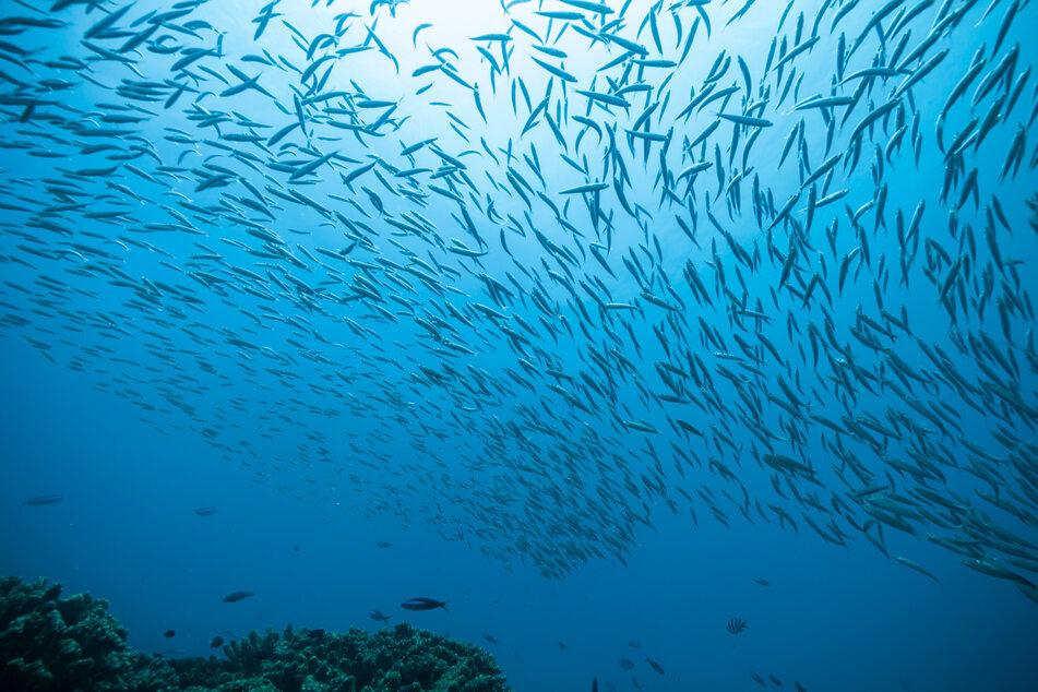 Riesiger Fisch schlägt Angler auf Boot zu Tode