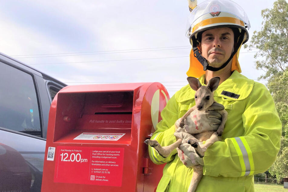 So grausam können Menschen sein! Feuerwehr rettet süßes Känguru-Baby aus einem Briefkasten