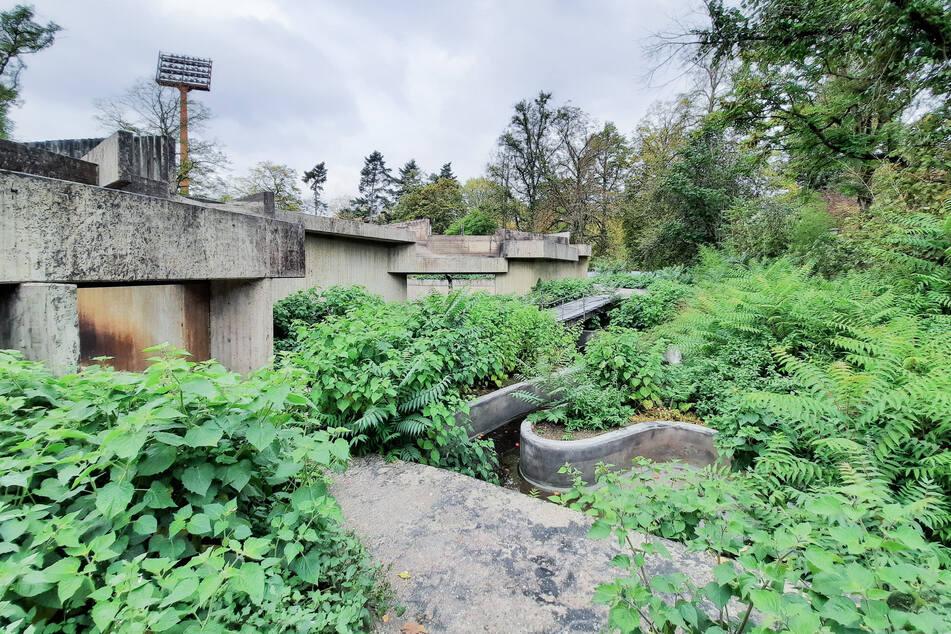 Nach Horror-Brand im Krefelder Affenhaus: Was wird aus der zugewucherten Ruine?