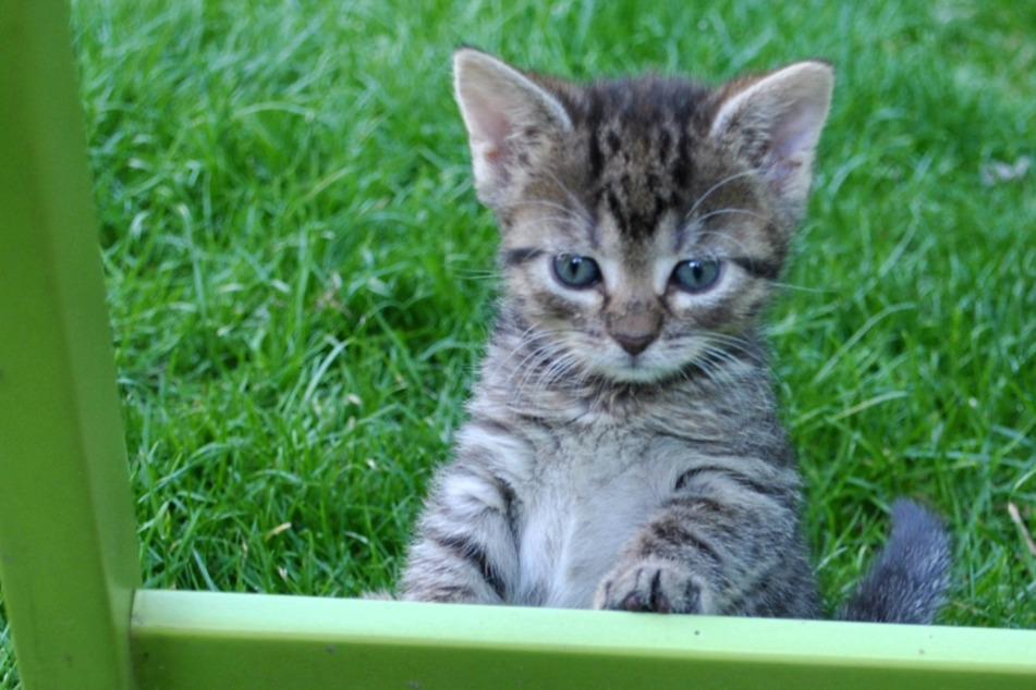 Wer kann diesem süßen Katzenkind schon widerstehen?