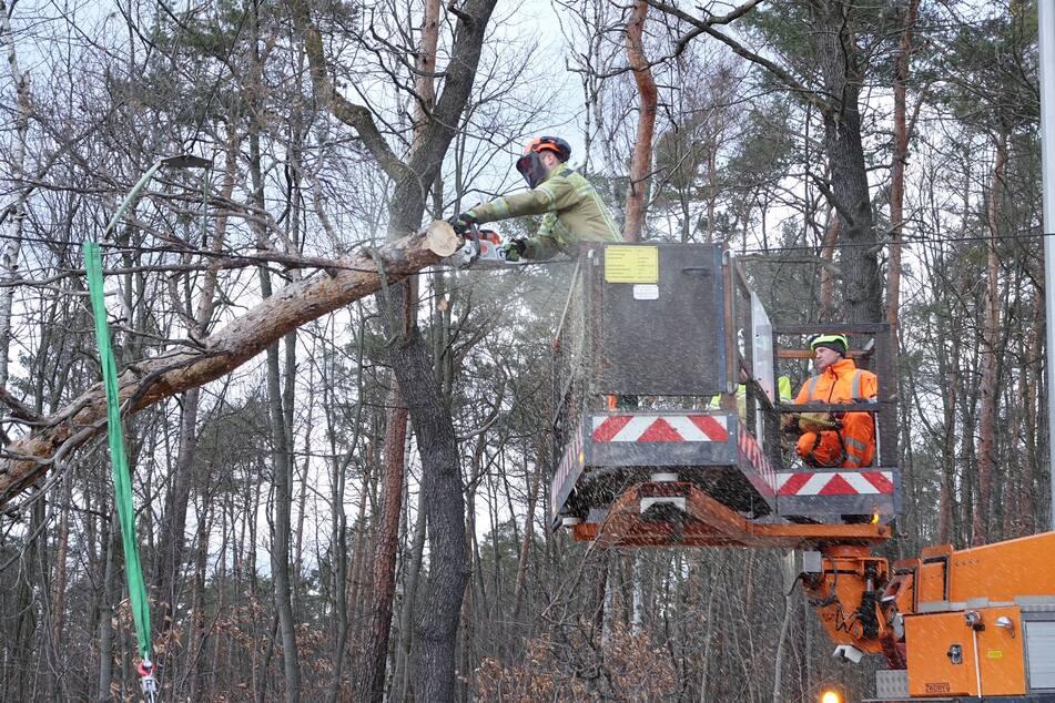 Ein Fachmann zersägte den Baum kurzerhand und so konnte die Bahnstrecke bald wieder freigegeben werden.