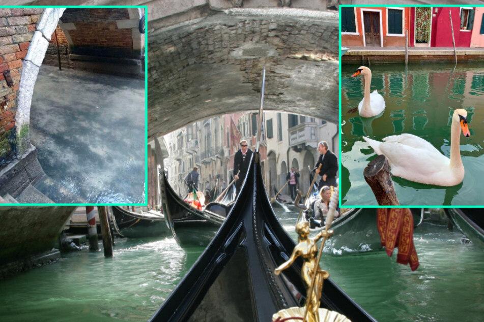 Coronavirus-Effekt in Venedig: Darüber freuen sich die Einheimischen!