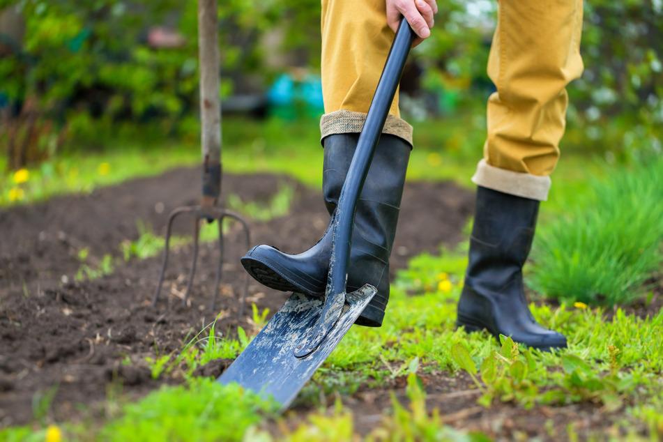 Ein bisschen eigenes Obst und Gemüse anbauen und die frische Luft auf der Scholle im Grünen genießen: Vielen hilft das zum Abschalten. (Symbolbild)