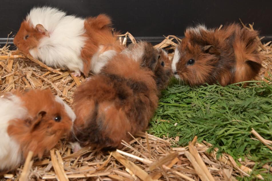 Endlich wieder frei bewegen: Das Tierheim hat die Nager aus ihren viel zu engen Käfigen geholt.