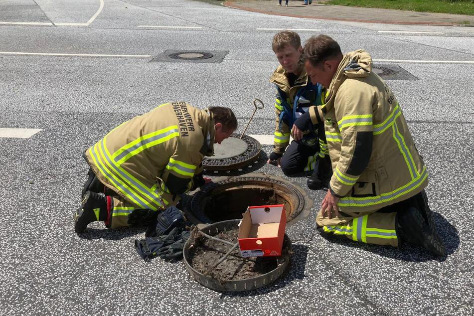 Tierische Rettungsaktion: Feuerwehr spült Küken aus einem Gulli