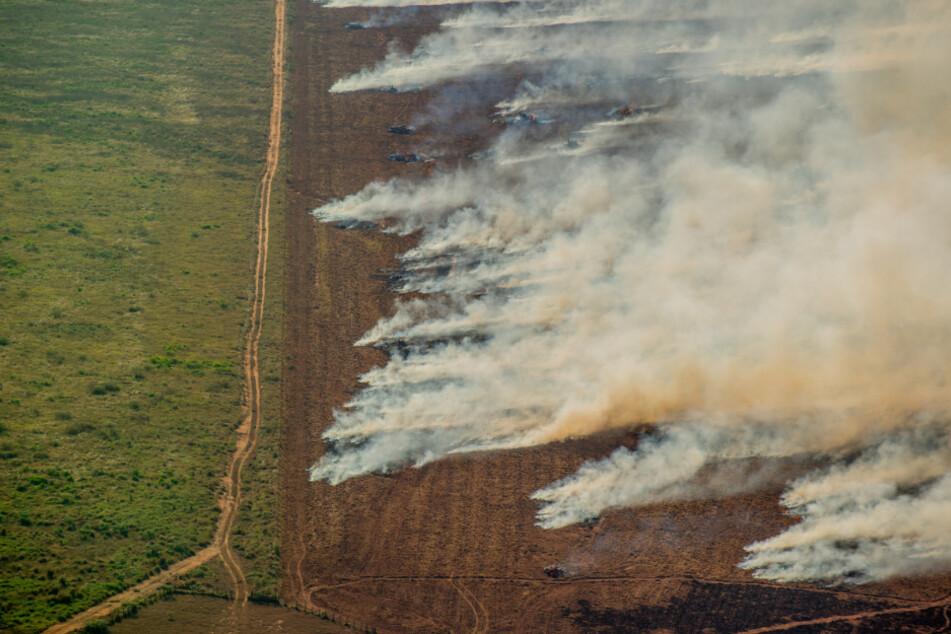 Trotz Abbrenn-Verbot: Weiterhin Feuer im Amazonas-Regenwald