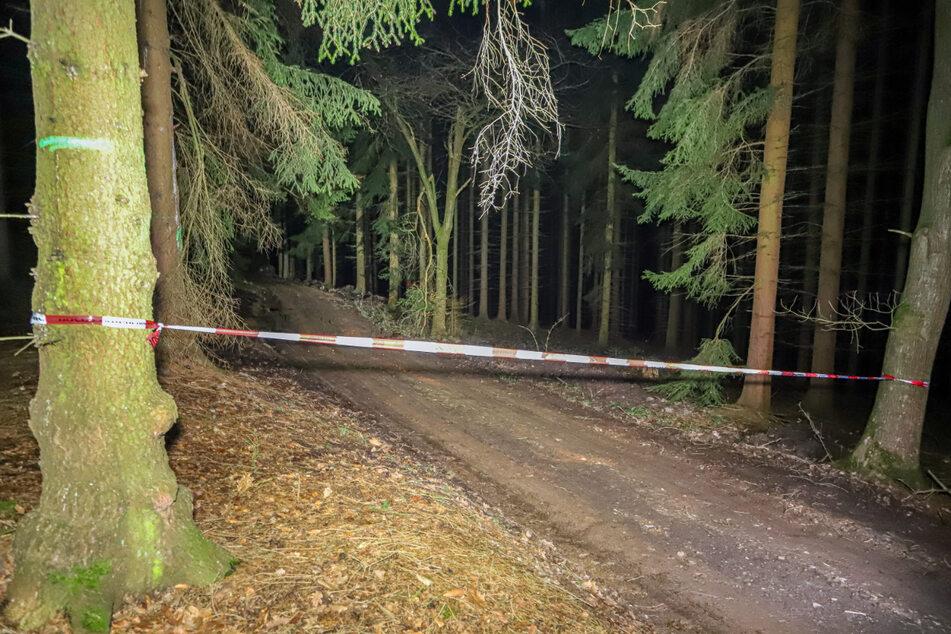 In diesem Wald zwischen Einsiedel und Dittersdorf fanden Forstarbeiter eine Bombe.