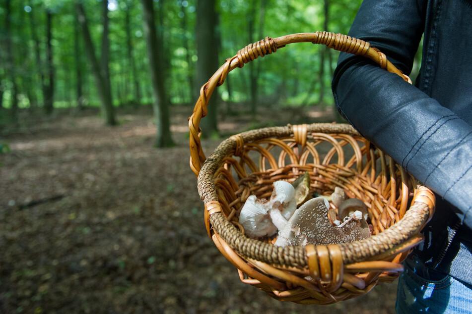 Horror-Fund: Pilzsammler macht grausige Entdeckung in einem Wald!