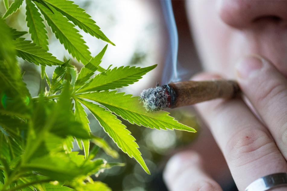 Krasses Gras im Umlauf! Gepanschtes Cannabis sorgt bei Kiffern für Horrortrips