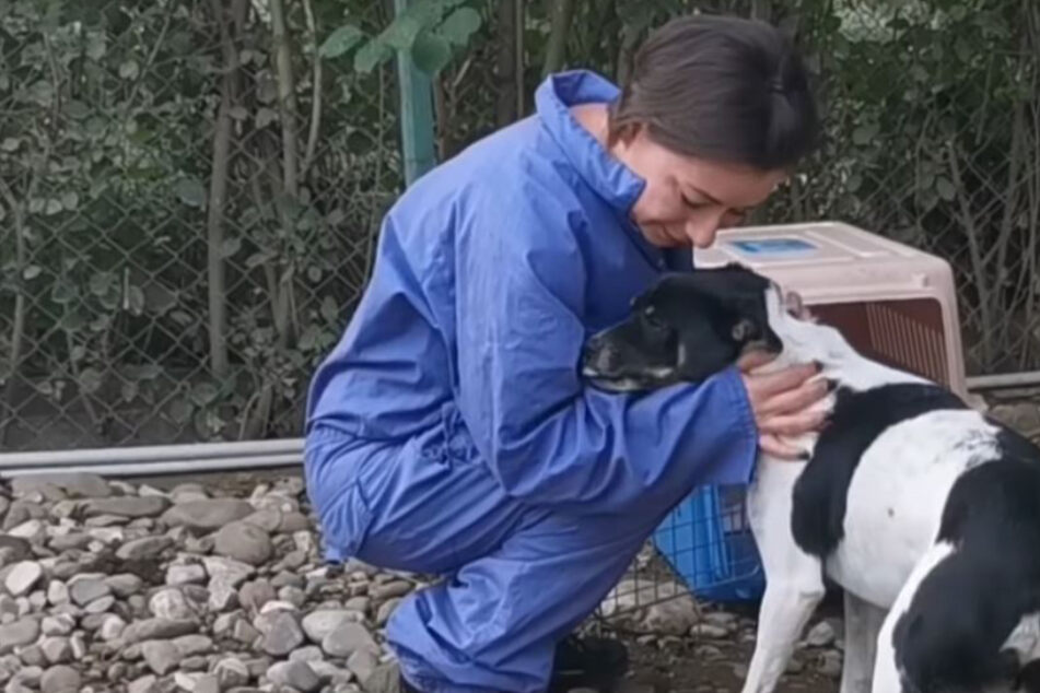 Badly injured dog is rescued and given a vital helping paw