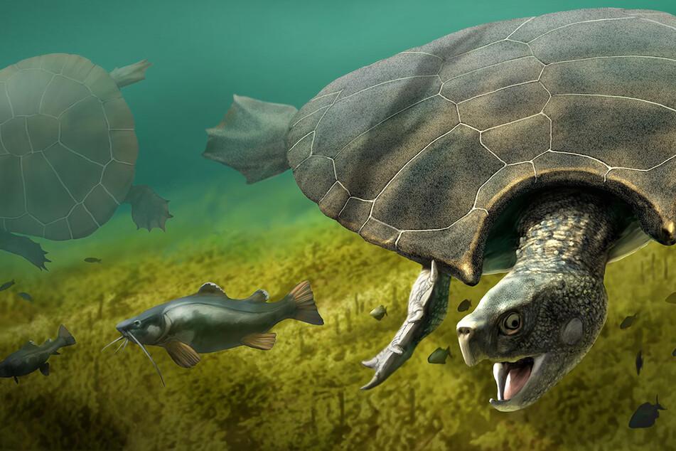 Diese Illustration zeigt ein Männchen der Riesenschildkröte Stupendemys geographicus das im Süßwasser einen Fisch jagd.