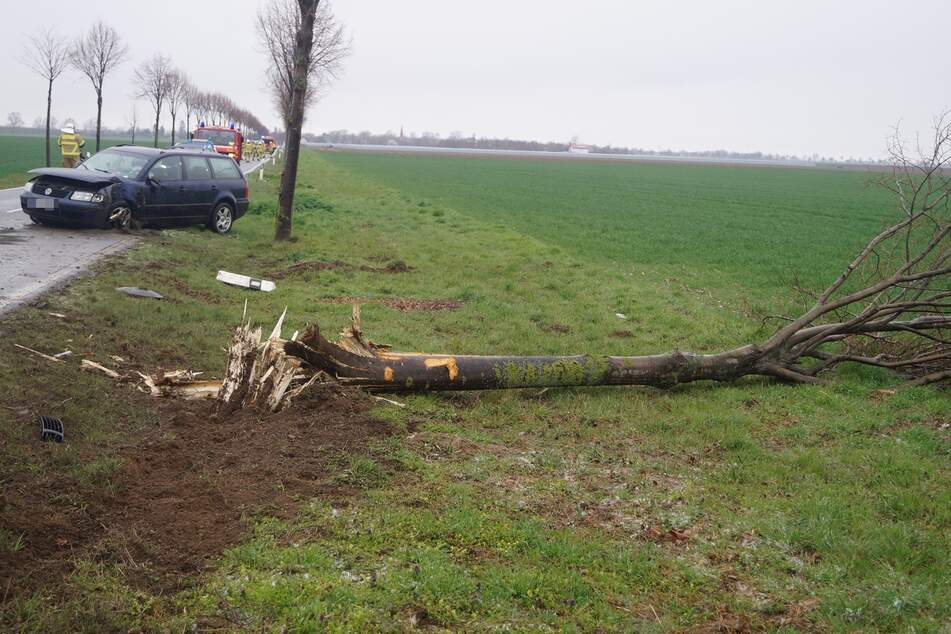 Crash in Rechtskurve: VW fällt Baum und überschlägt sich