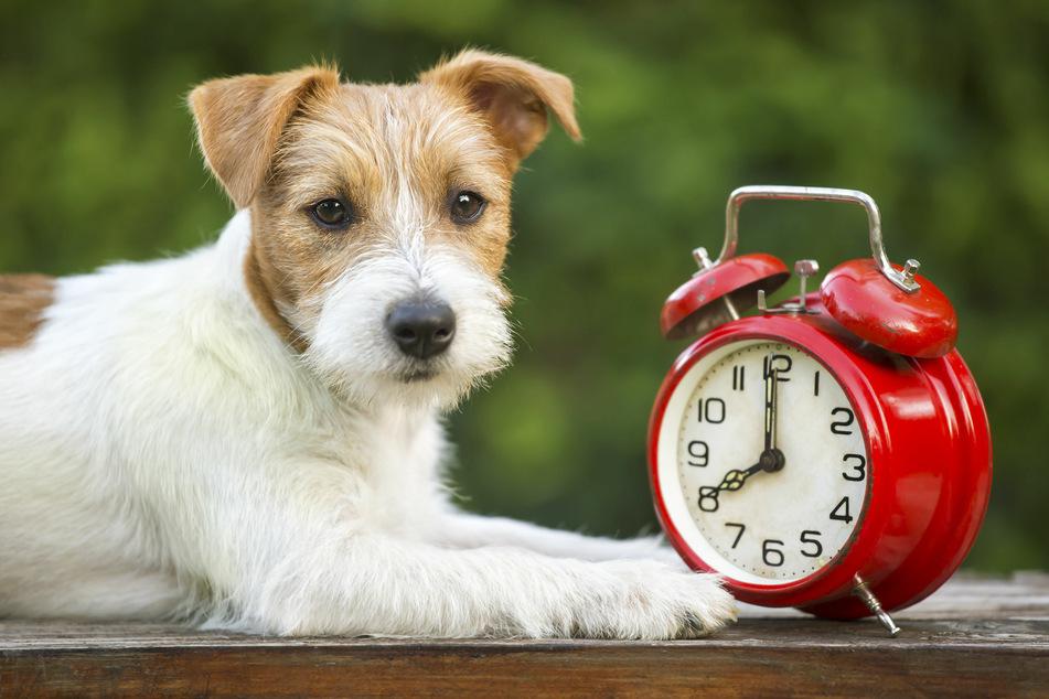 Wer hat an der Uhr gedreht, was wissen Hunde über Zeit?