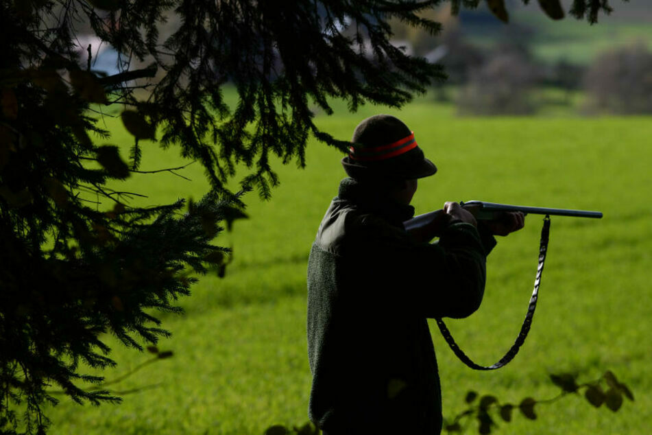 Jungbulle büxt aus: Jäger muss im Wald zur Waffe greifen