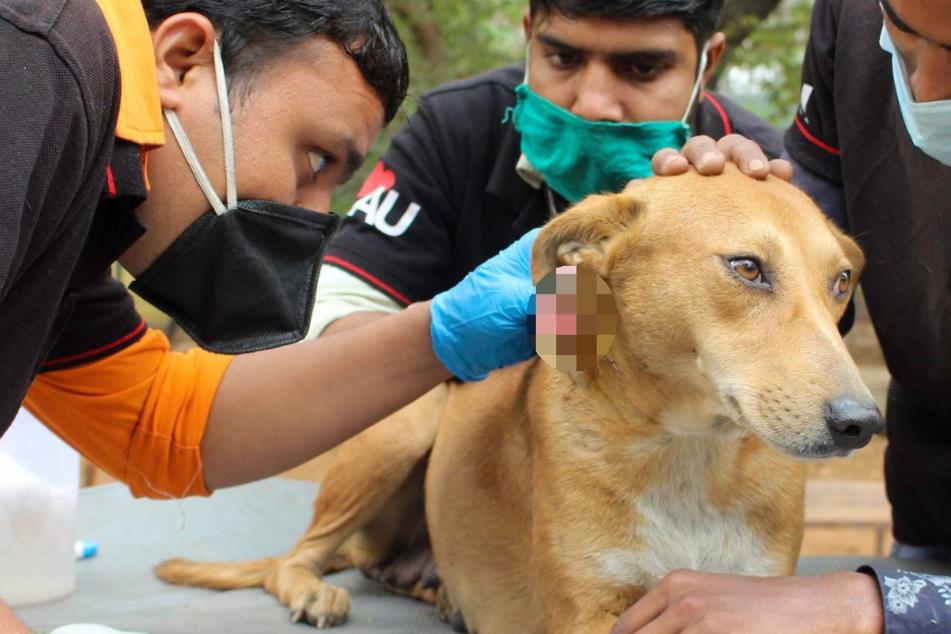 Alle denken, dieser Hund hat eine Halswunde: Doch dann finden sie die bittere Wahrheit heraus