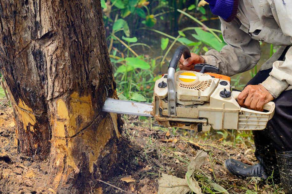 Bei Arbeiten in seinem Waldgrundstück ist ein 68-Jähriger offenbar tödlich verunglückt. (Symbolbild)