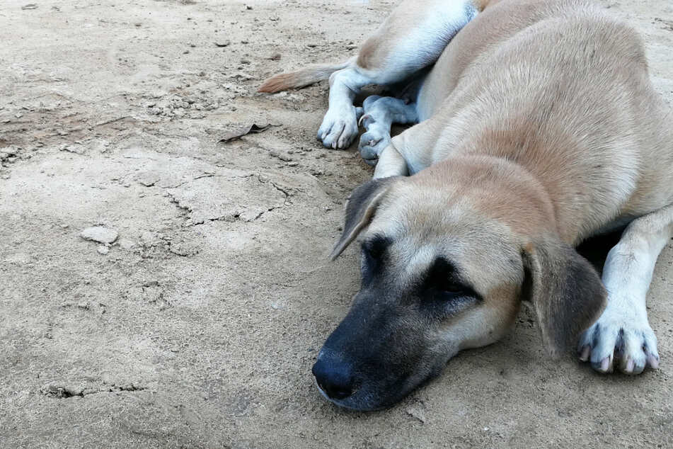 Grieving dog buries his dead friend in a heartbreaking video