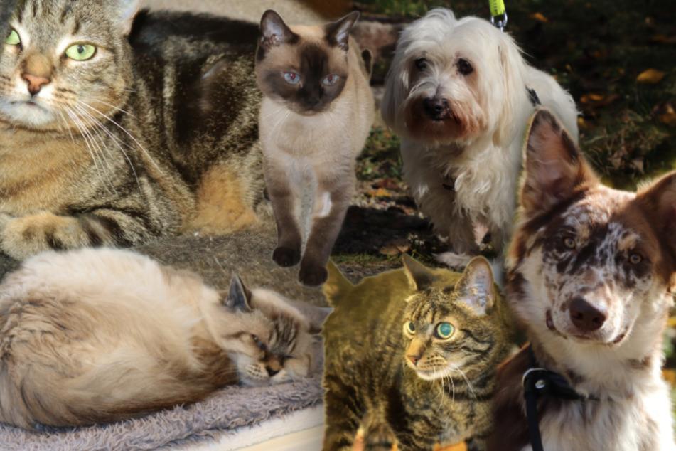 6 besondere Hunde und Katzen: Diese Tiere suchen dringend ein Zuhause