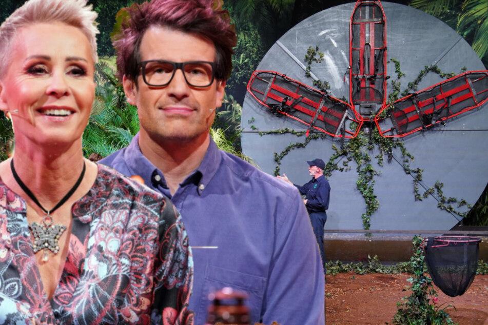 Mega-Fail in der Dschungelshow! Diesen peinlichen Fehler hat sich RTL erlaubt