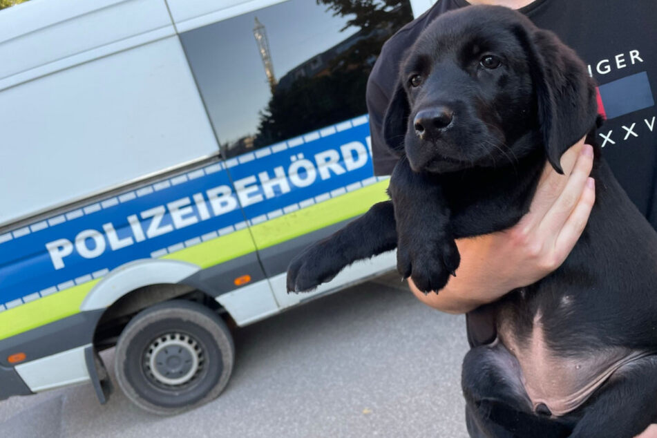 Eines der beiden in Stuttgart geretteten Hundebabys.