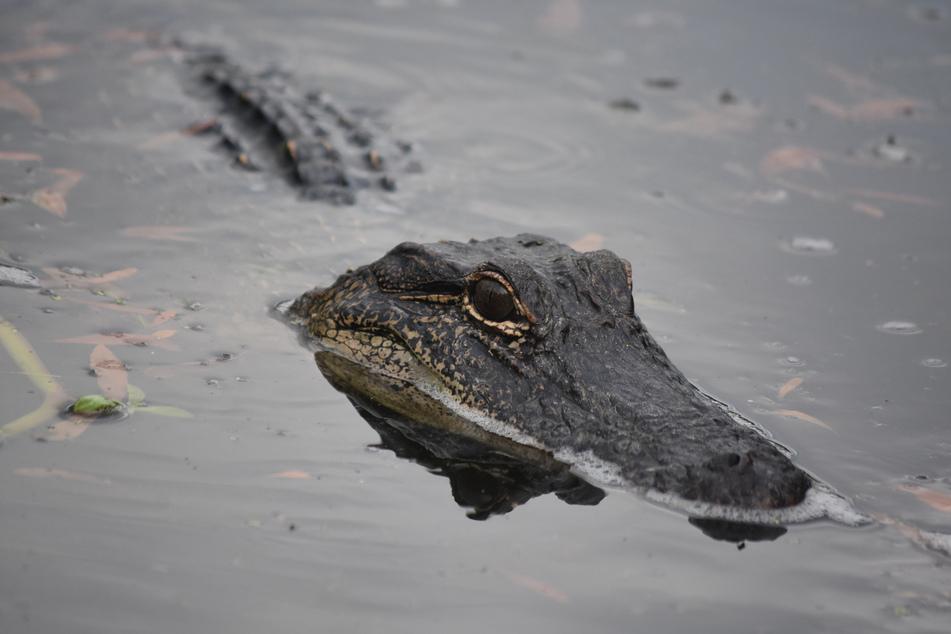 Gibt es wirklich ein Krokodil in der Unstrut? Bislang blieb jede Suche erfolglos. (Symbolbild)